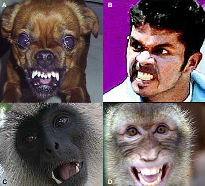 Which one am I?  Sree Sreesanth is all of them, at the same time!!  Because I'm a bloody serial killer!