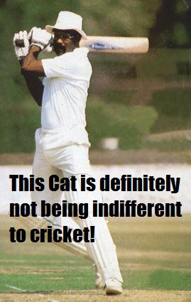 A cat not being indifferent to cricket